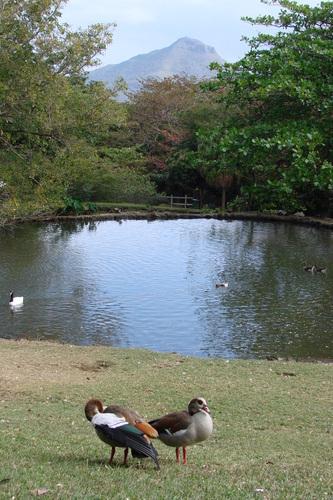 Птичий парк Касела
