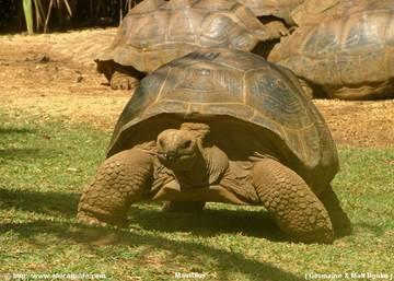 La vanille -  черепаховый парк