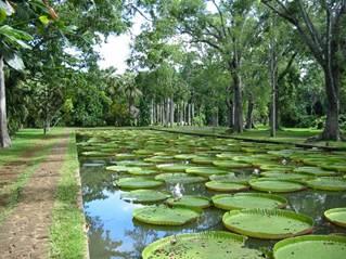 Ботанический сад Сивусагура Рамгулама